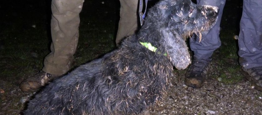 Rescue: Muddy but safe!