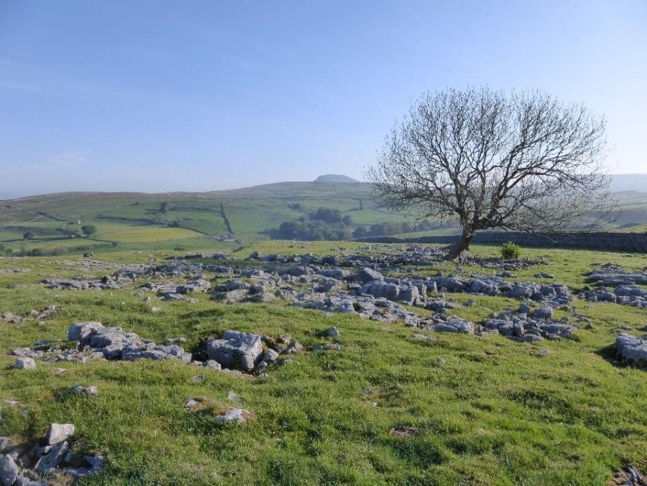 Limestone pavement has been removed