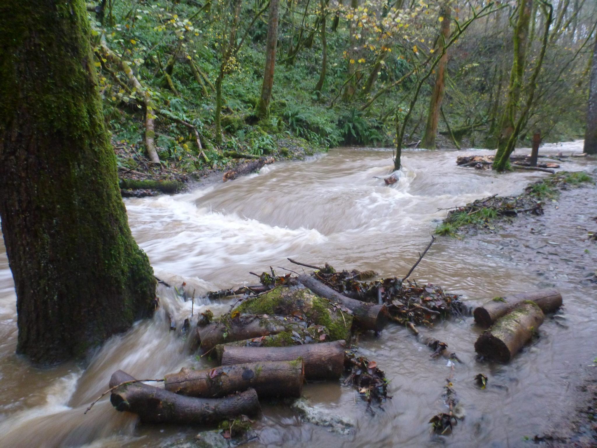 Longwood Valley Sink in Flood